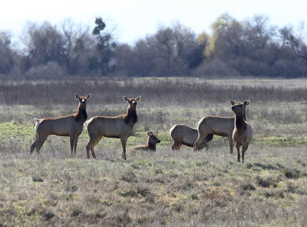 san-luis-merced-national-wildlife-refuge22