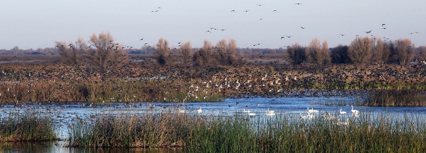 san-luis-merced-national-wildlife-refuge26