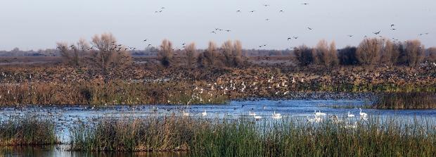 san-luis-merced-national-wildlife-refuge26