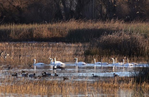 san-luis-merced-national-wildlife-refuge28