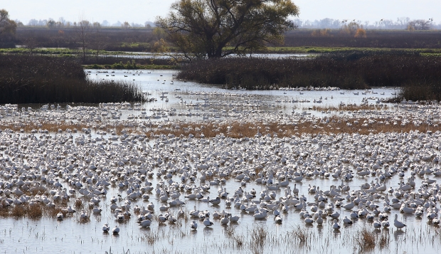 san-luis-merced-national-wildlife-refuge29