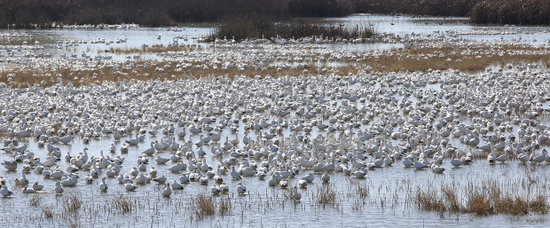 san-luis-merced-national-wildlife-refuge31