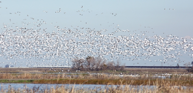 san-luis-merced-national-wildlife-refuge32