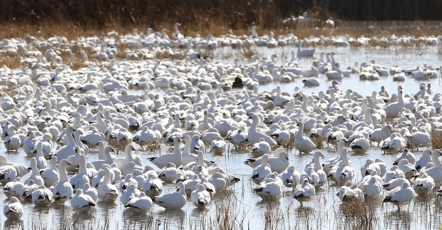 san-luis-merced-national-wildlife-refuge34