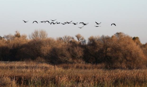 san-luis-merced-national-wildlife-refuge36