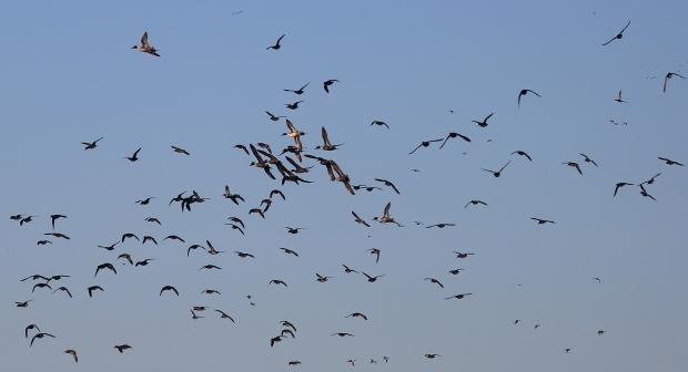 san-luis-merced-national-wildlife-refuge37