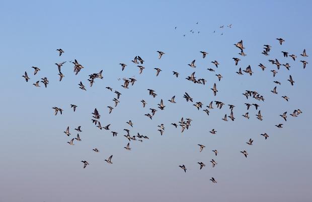 san-luis-merced-national-wildlife-refuge39