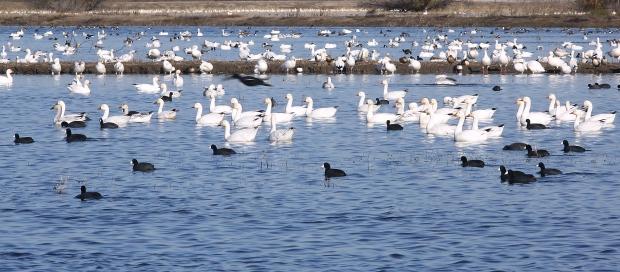 san-luis-merced-national-wildlife-refuge41
