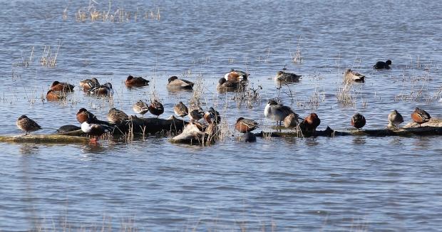 san-luis-merced-national-wildlife-refuge42