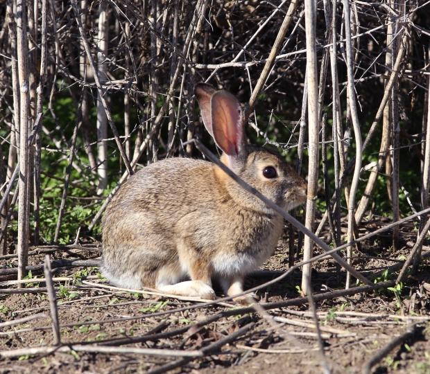 san-luis-merced-national-wildlife-refuge44