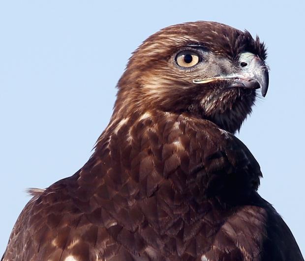 san-luis-merced-national-wildlife-refuge45