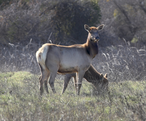 san-luis-merced-national-wildlife-refuge5
