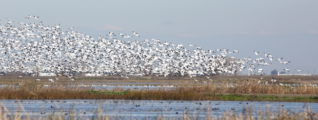 san-luis-merced-national-wildlife-refuge9