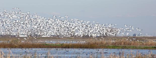 san-luis-merced-national-wildlife-refuge9